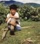Au Cambodge, enfants de la survie